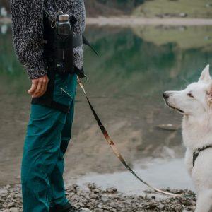 Pas do biegania i spacerów z psem