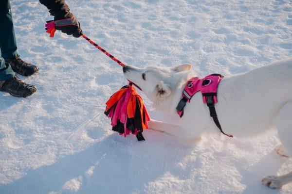 Szarpak polarowy Fluffy do zabawy z psem
