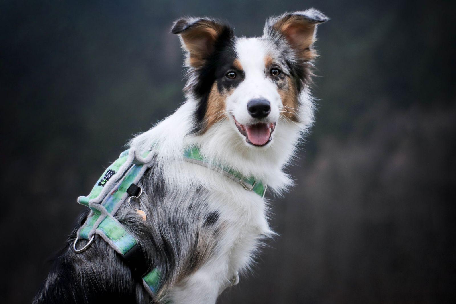 szelki dla psów