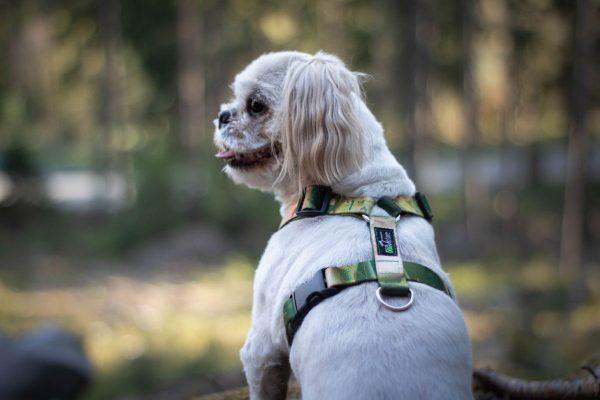 Szelki dla psa z leśnym wzorem