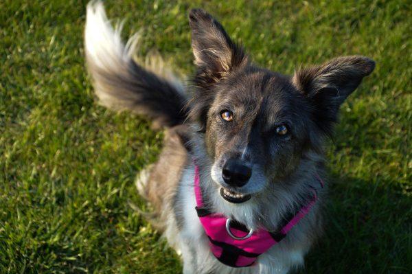 Szelki sportowe dla psów