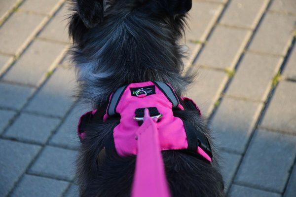 Szelki zabudowane sportowe dla psów
