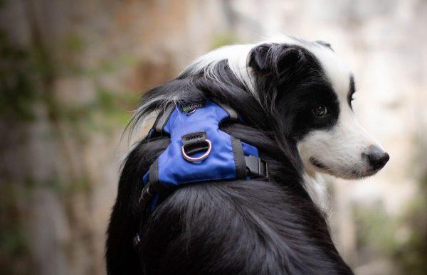 Najlepsze zabudowane szelki dla psa