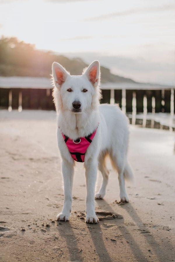 Zabudowane szelki dla psa