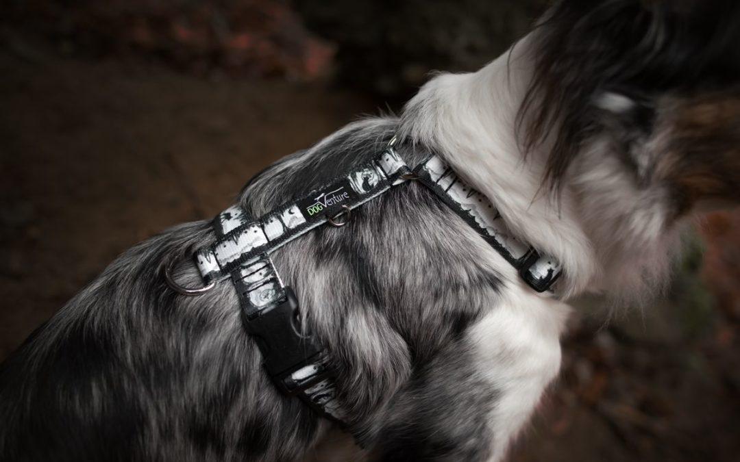 Szelki dla psa. Jak dobrze zmierzyć psa aby idealnie dopasować szelki?