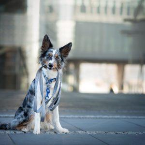 Smycz dla psa DogVenture