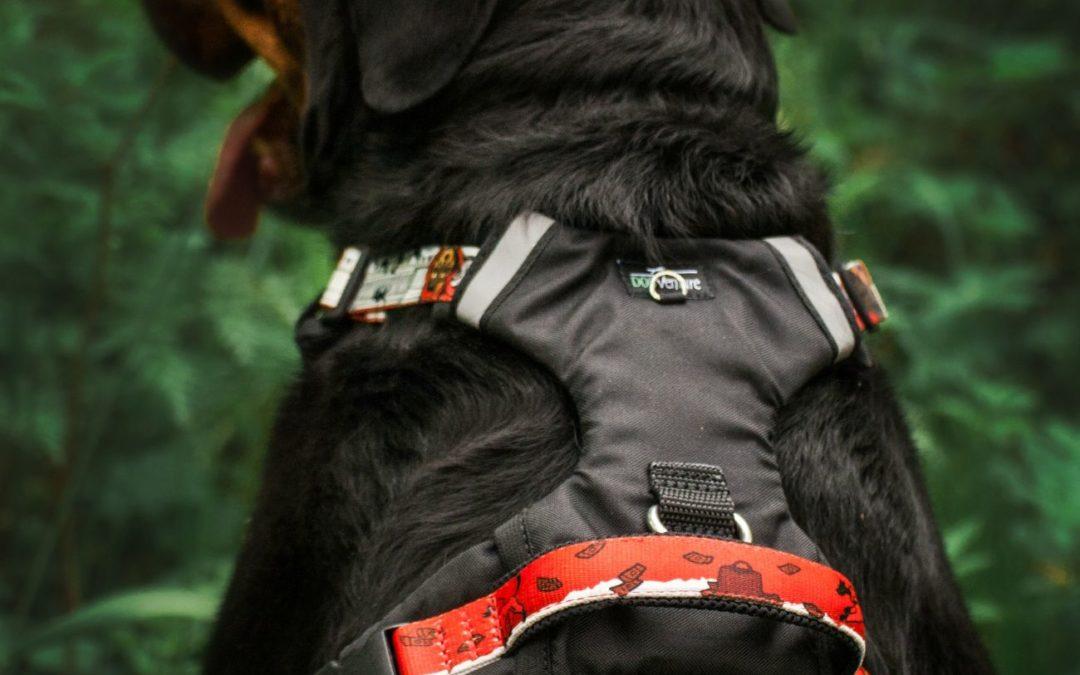 Najlepsze szelki dla psa do zadań specjalnych?
