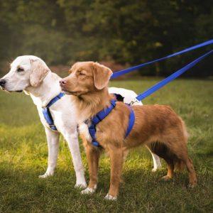 Dwójnik dla psów