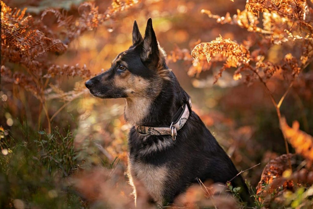 Obroża dla psa Mountain Spirit