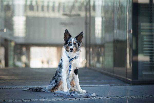 Obroża dla psa DogVenture