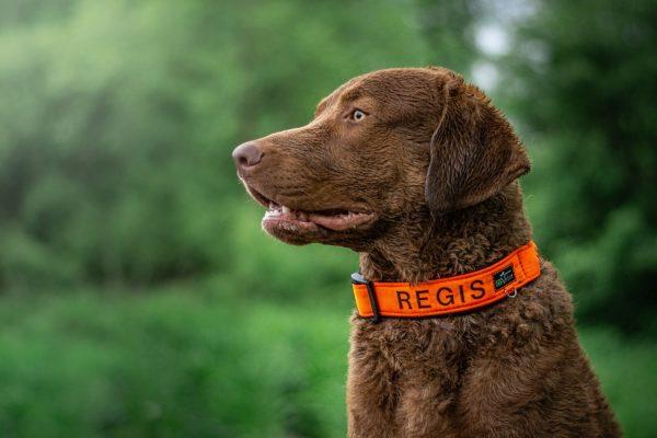 Obroża dla psa z haftem