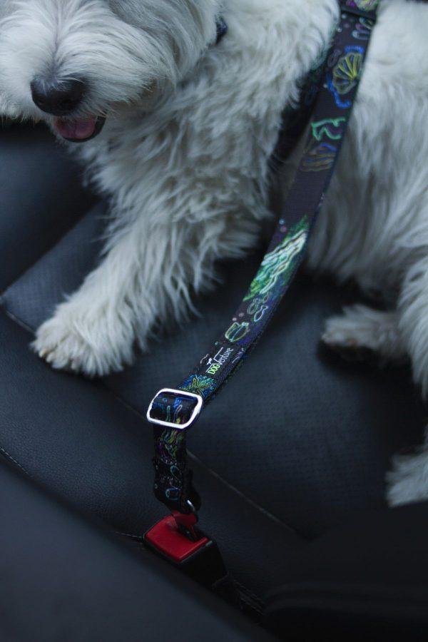 Pas do auta dla psa