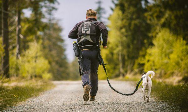 Pas do biegania z psem