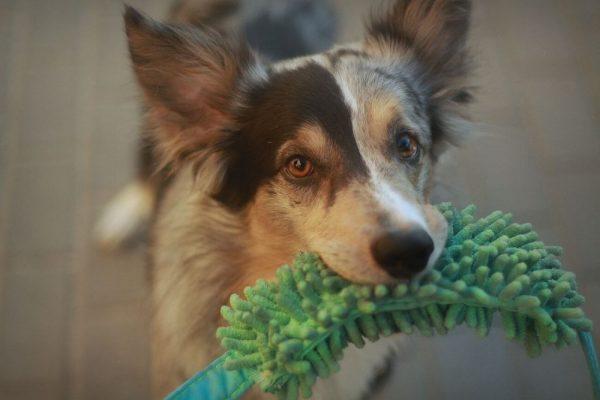 Smycz treningowa DogVenture