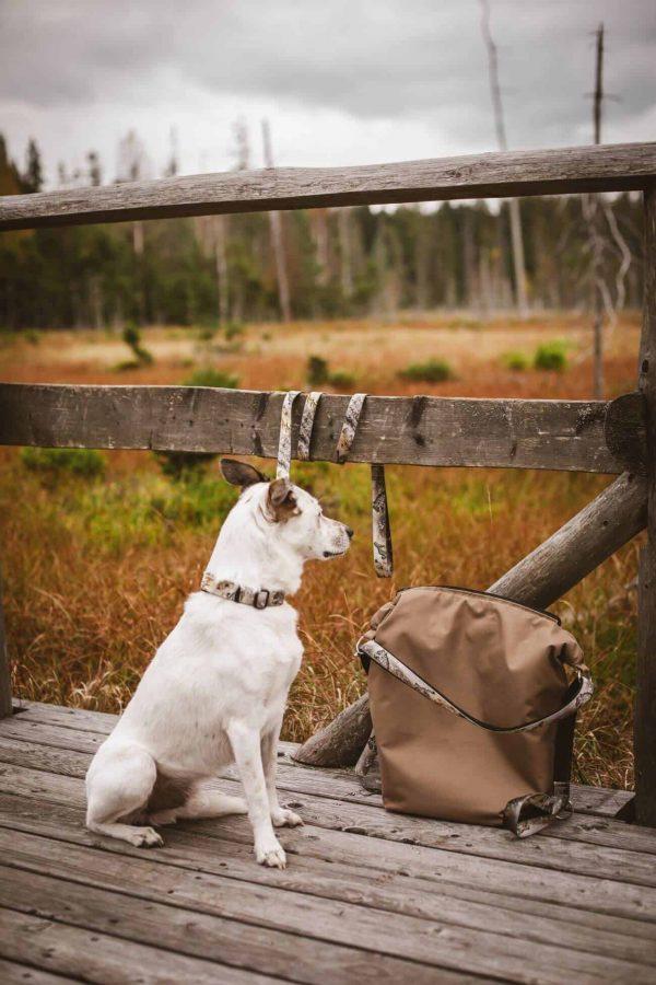 Smycz dla psa Mountain Spirit