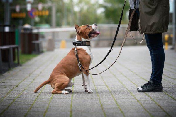 Smycz przepinana dla psa