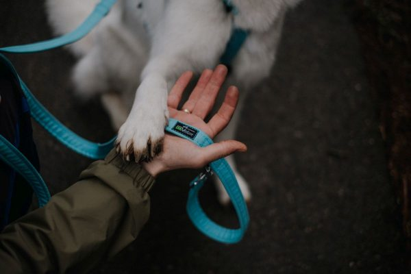 Smycz dla psa Nova Series