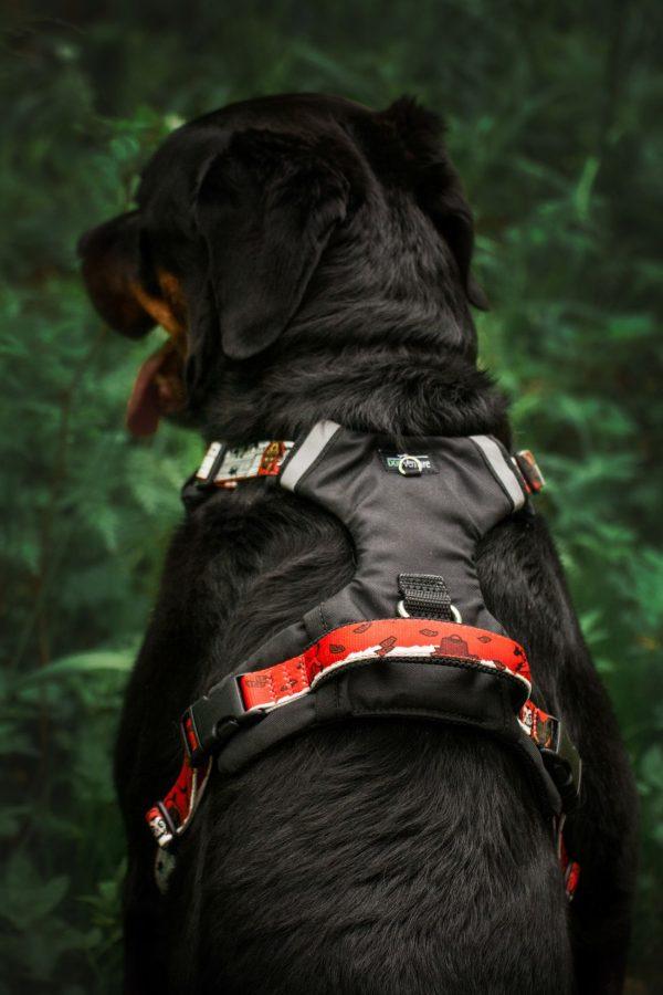 Szelki dla psa Adventure PRO