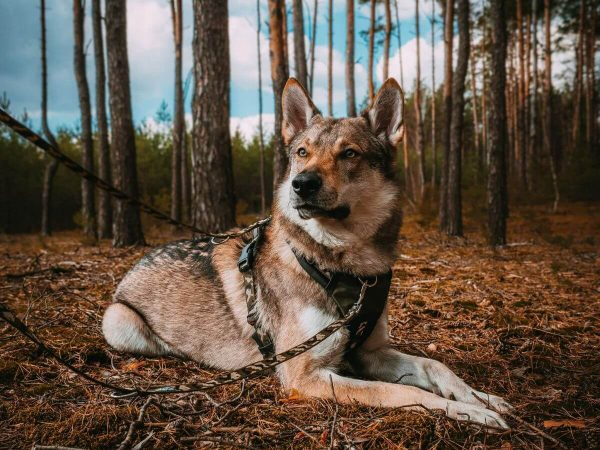 Szelki dla psa z rączką Adventure PRO