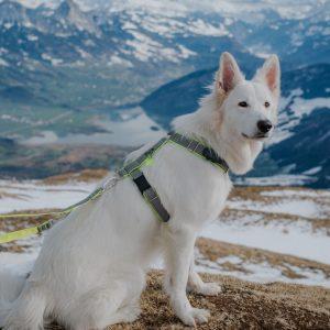 Szelki dla psa od DogVenture