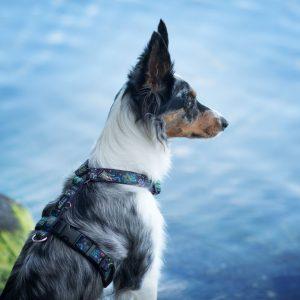 Szelki dla psa Be For Ocean