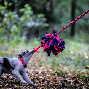 Obroża dla psa Just Pink i szarpak fluffy
