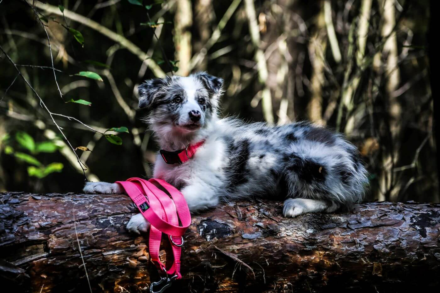 Obroża z klamrą i smycz dla psa Just Pink
