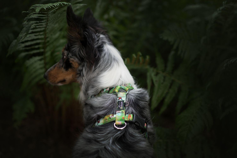 Szelki dla psa DogVenture